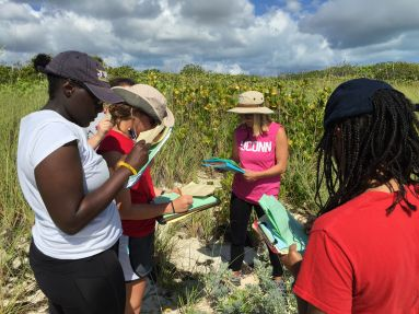 Students survey dune plant diversity along an abiotic gradient